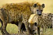 http://www.traveladvisortips.com/kruger-national-park-safaris-101-visitor-guide/ - Kruger National Park Safaris: 101 Visitor Guide