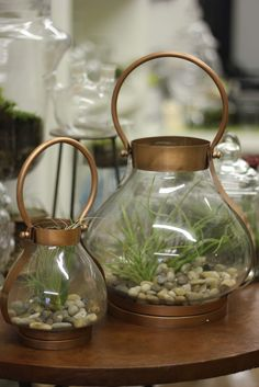 Terrariums are making a comeback!    Small Beacon airplant terrarium