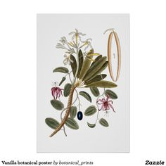Vanilla botanical poster