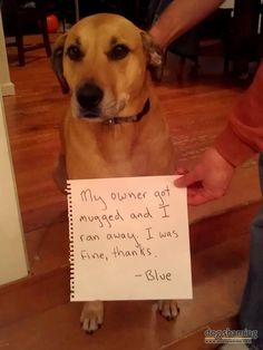 """I was fine, thanks"" oh man this made me laugh so hard. One of my favorite dog shaming pictures yet #catsfunnylaughingsohard"