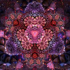 35 Beautiful Examples of Fractal Flowers Altered Bottles, Art For Art Sake, Patterns In Nature, Whimsical Art, Fractal Art, Mandala Art, Sacred Geometry, Beautiful Images, Beautiful Flowers