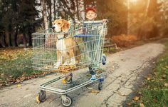 Boy walk with dog in shopping trail ** Note: Shallow depth of field Poster. Animals For Kids, Cute Baby Animals, Raza Chihuahua, Purebred Dogs, Goddess Braids, Creative Photos, My Animal, Cute Babies, Puppies