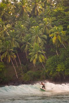 Mirissa Beach, surfer surfing in front of palm trees, South Coast of Sri Lanka, Asia Sri Lanka Plage, Sri Lanka Surf, Surf Trip, Beach Trip, Beach Travel, Surf Travel, Beach Fun, Voyage Sri Lanka, Sri Lanka Reisen