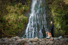Auckland, New Zealand Kiwiana, New Zealand Travel, Auckland, Dog Lovers, Travel Destinations, Waterfall, Travel Photography, Paradise, Dogs