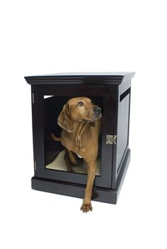 DenHaus TownHaus Indoor Dog House and End Table, Espresso, Large Comfort for the whole family is easy with the TownHaus, a finely-crafted end table that does Read  more http://dogpoundspot.com/dog-luxury-store-1238/  Visit http://dogpoundspot.com for more dog review products