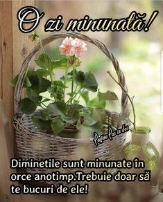 Optimism, Good Morning, Plants, Buen Dia, Bonjour, Plant, Good Morning Wishes, Planets