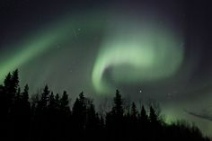 Northern Lights over trees outside Fort Liard Northwest Territories, Aurora Borealis, North West, Northern Lights, Trees, Nature, Painting, Image, Beautiful