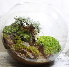 Sphere terrarium designed like a cliffside