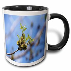 Jos Fauxtographee Realistic - A Budding Green Stem of a Tree in Focus with the Rest of The Tree Out of Focus on a Blue Sky - 11oz Two-Tone Black Mug (mug_47522_4) 3dRose http://www.amazon.com/dp/B01351N0LG/ref=cm_sw_r_pi_dp_OFaZvb0G41GG7