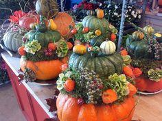 Herfst Pumpkin Arrangements, Fall Floral Arrangements, Seasonal Decor, Fall Decor, Creative Pumpkins, Fall Table, Deco Table, Fall Diy, Halloween Art