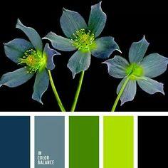Green / blue //