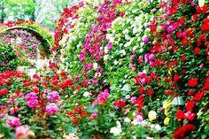 English Cottage Garden *** Visit the image link more details.(This is an Amazon affiliate link and I receive a commission for the sales)