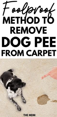 DIY Dog Urine Odor Remover With Essential Oils is a Natural Way to Get Dog Urine Smell Out of the Carpet cleaning hacks pet urine How to Remove Dog Urine Odor From The Carpet Urine Odor, Urine Stains, Pet Urine, Pet Odors, Remove Stains, Dog Urine Remover, Carpet Stains, Dog Pee Smell, Dog Smells