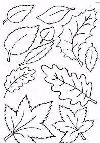 Varice pe picioare tratate cu frunze de dafin