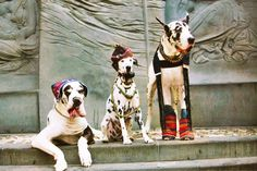 Another @thedogstyler shoot for @huffingtonpost #nyc #greatdane #dalmatian #dogsonq #dogtraining #nyfw