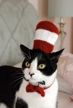 Cat in a Hat .... This makes me laugh every time I look at it!!! Toooooo funny...