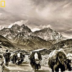 Mt. Everest via @National Geographic