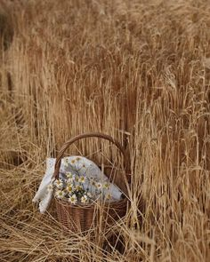 Brown Aesthetic, Summer Aesthetic, Aesthetic Vintage, Aesthetic Photo, Welcome July, Photo Images, Green Gables, Fields Of Gold, Wall Collage