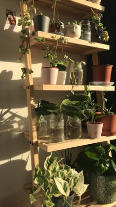 Plant Aesthetic, Aesthetic Room Decor, My New Room, My Room, Room Ideas Bedroom, Bedroom Decor, Room With Plants, Indie Room, Bedroom Plants