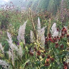 Garden Inspiration, Instagram Posts, Floral, Green, Plants, Colour Palettes, Color, Household, Autumn