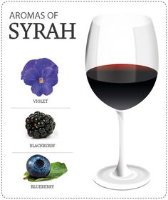 Aromas do sirah Wine Tasting Near Me, Wine Tasting Experience, Wine Facts, Wine Coolers Drinks, Wine Varietals, Sangria Wine, Wine Education, Wine Guide, Cheap Wine