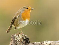 Robin bossen
