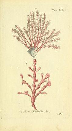 Bd 10 plates (1787) - Gemeinnüzzige Naturgeschichte des Thierreichs : - Biodiversity Heritage Library