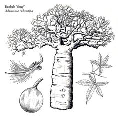 African Tree, Jellyfish Tattoo, Baobab Tree, Tree Sketches, Stamp Carving, Pirate Life, Tree Illustration, Visionary Art, Botany