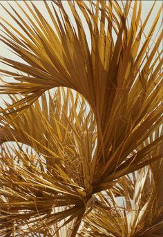 [Palm leaves, Jamaica] William Eggleston Chromogenic print, 1978 J. Paul Getty Trust