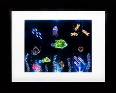 What a unique piece of art! This is hand carved acrylic with 3D fish in a lighted frame! Would make for a very neat gift.