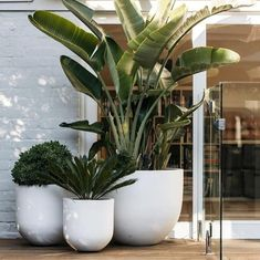 And videos indoor plants, pool plants, balcony plants, balcony garden, gard Outdoor Pots, Outdoor Gardens, Outdoor Living, Large Outdoor Planters, White Planters, Large Garden Pots, Potted Garden, Small Outdoor Spaces, Large Pots
