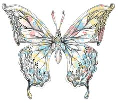 hand drawing watercolor butterfly graphic #butterfly #hand drawn #art #detail #graphic #Ornaments  #illustration  #watercolor #colorful