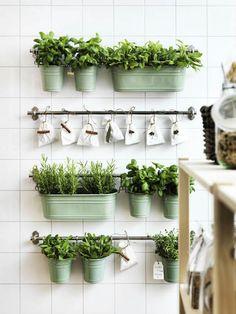 зелень горшки висящие на стене