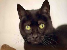 BLACKIE (sweet senior) PITTSBURGH, PA...PetHarbor.com: Animal Shelter adopt a pet; dogs, cats, puppies, kittens! Humane Society, SPCA. Lost & Found.
