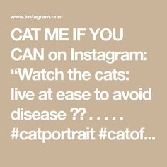 """CAT ME IF YOU CAN on Instagram: """"Watch the cats: live at ease to avoid disease 🐈💛 . . . . . #catportrait #catofday #catcatwalk #catoftheworld #catpicoftheday…"""" Cat Walk, Canning, Watch, Live, Instagram, Walkway, Clock, Bracelet Watch, Clocks"""