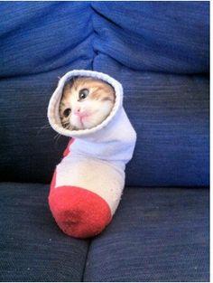 Cat_apillar