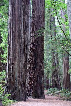 Redwoods National & State Parks