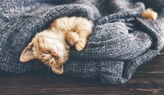 Sweet kitten napping.