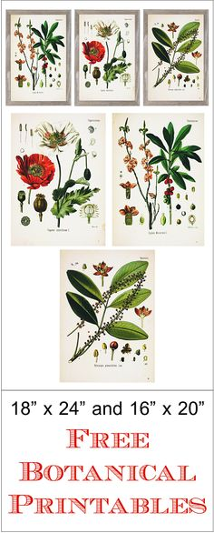 "Free 18"" x 24"" and 16"" x 20"" Botanical Printables from www.simplymadebyrebecca.wordpress.com."
