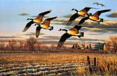 Artist Cynthie Fisher Unframed Canadian Geese Picture Dropping In Wildlife Paintings, Wildlife Art, Hunting Painting, Waterfowl Hunting, Duck Hunting, Duck Art, Fisher, Sports Art, Pictures To Paint