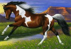 Pinto horse southwest limited edition aceo print art by B. Voth