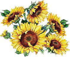 Beautiful clipart sunflowers