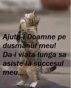 Jokes, Humor, Cats, Funny, Gatos, Husky Jokes, Kitty Cats, Humour, Animal Jokes