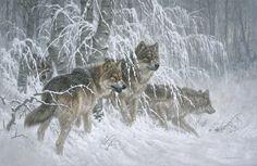 """""""Edge of Winter - Gray Wolves"""""""