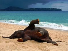 Elephant in Phuket, Thailand playing on the beach, byJohn Lindie