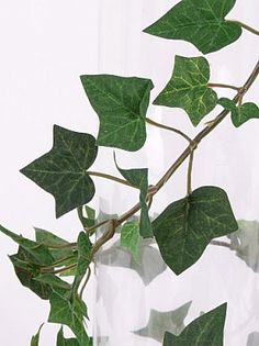 Plant Leaves, Green, Plant