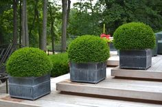 10 great examples of how to incorporate potted boxwoods in your landscaping   These round boxwoods in gray pots help to line the deck steps   Visit the post for more inspiration
