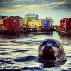 Nyksund Lofoten. Vesterålen. Norway