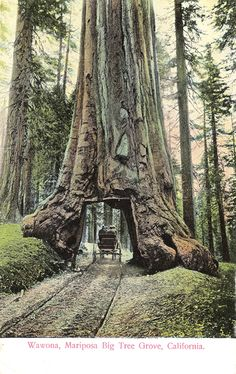 Northern California Redwoods Drive-Thru Tree | Road Trip ...
