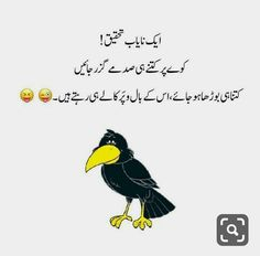 Very informative na. Mood Off Images, Funny Quotes In Urdu, Photography Poses For Men, Funny Pictures, Funny Pics, Saved Items, Out Loud, Good Times, Bindas Log